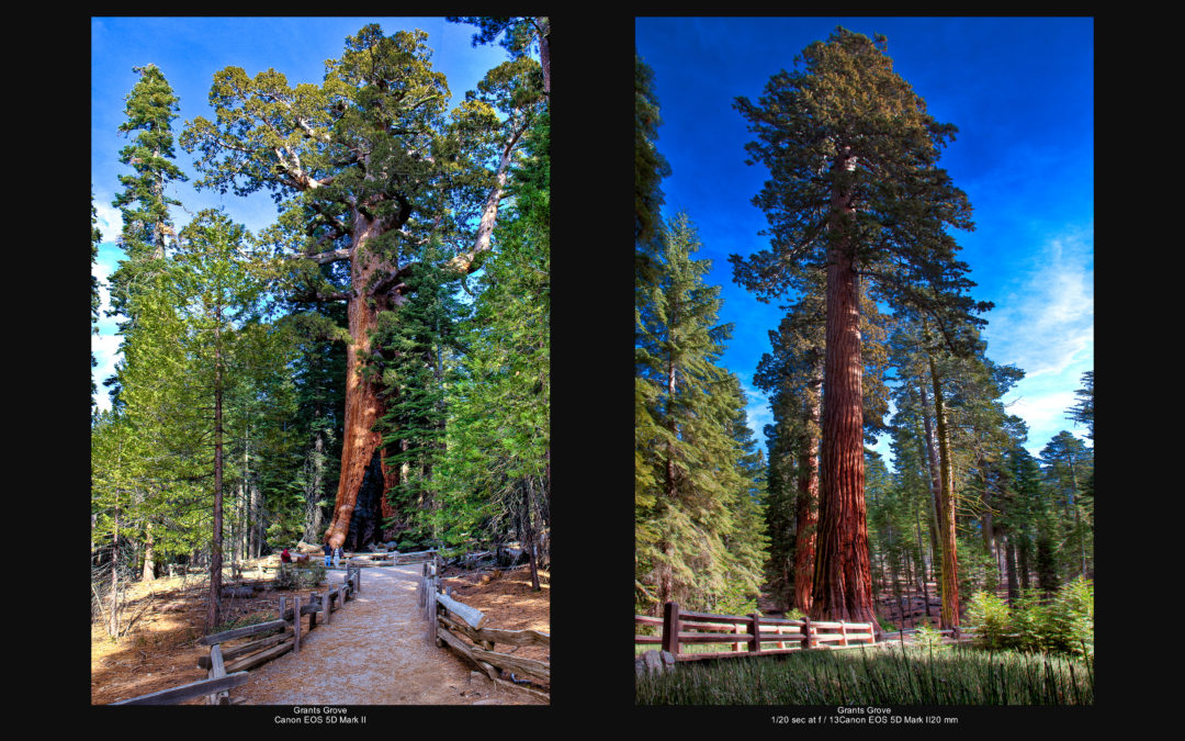 Mariposa Grove in Jan