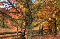 Sonoma Fall Colors