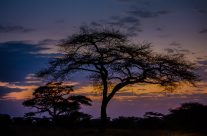 African Sunrise and Sunsets