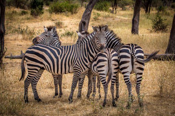 Tarangire NP Tanzania