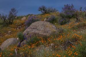 Spring Flowers-8