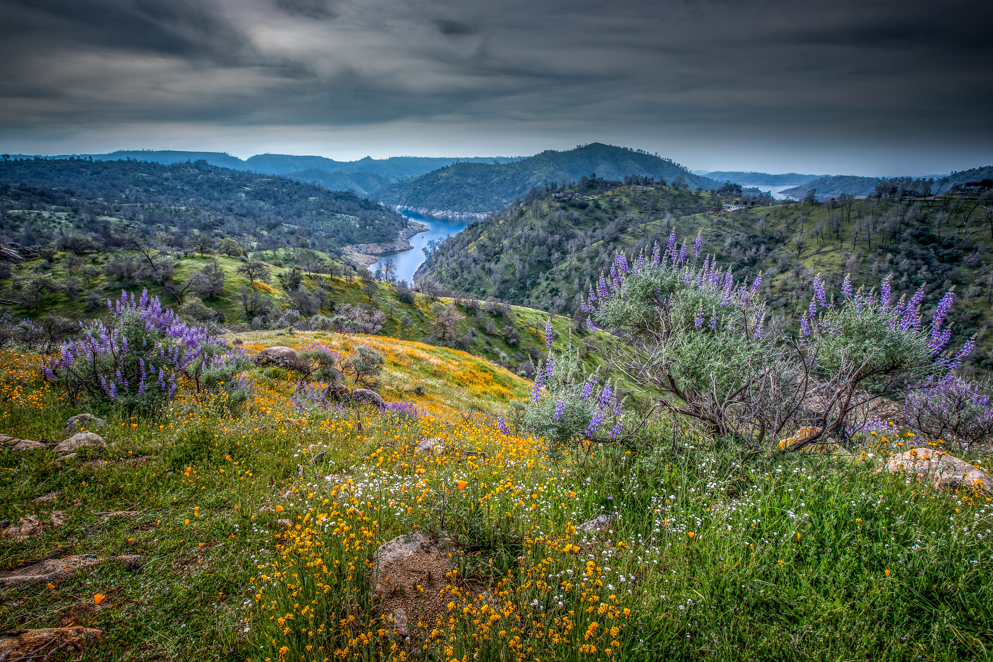Spring Bloom in Sierra Nevada Foothills